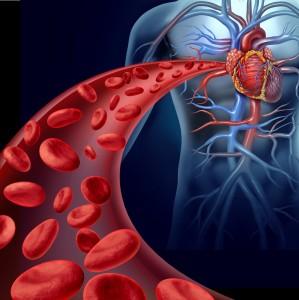 心臓から血管