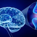 オメガ3系脂肪酸は脳を柔らかくする