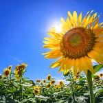 夏にとっておくと来年花粉症やインフルエンザになりにくくなる栄養素